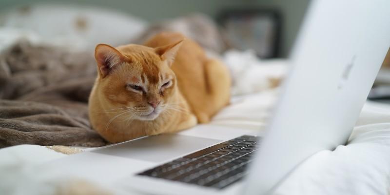 Wat is de Meow Bot en hoe kunnen sterke wachtwoorden u ertegen beschermen? screenshot